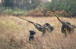 dev-hunting